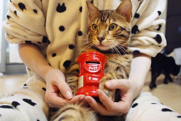 2年目の猫の飼育費用
