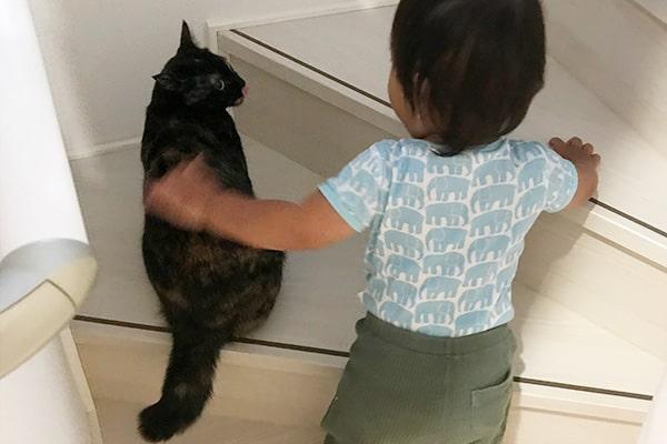 保護猫のトライアルと正式譲渡について