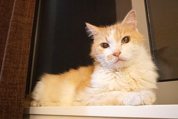保護猫ボランティアは楽しい