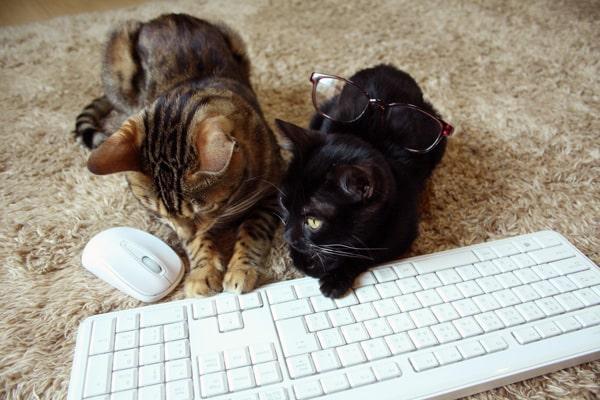 猫と暮らすときに注意すること