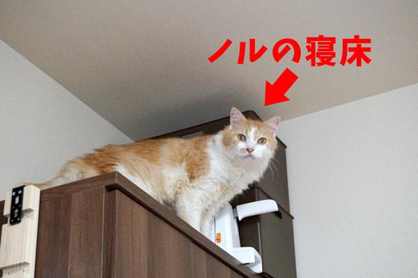 虐待されて汚物まみれになった猫を保護した