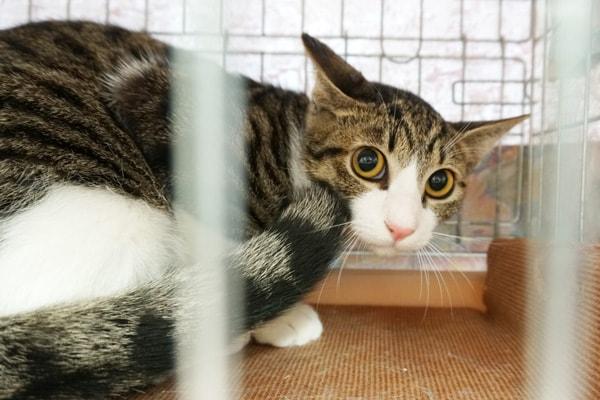 保護猫のボランティア団体って何をしているの?
