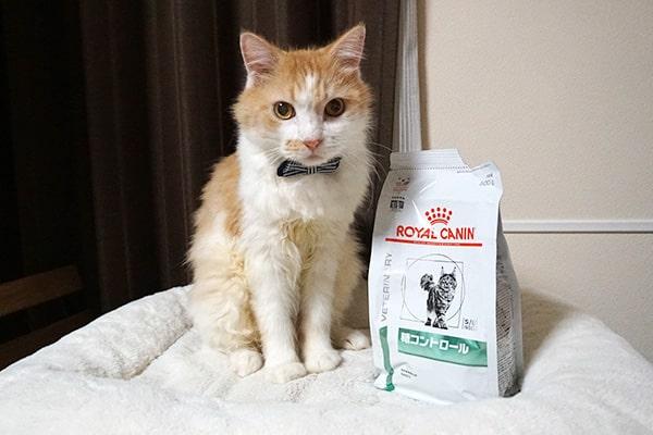 飼育放棄されていた猫の新しい生活