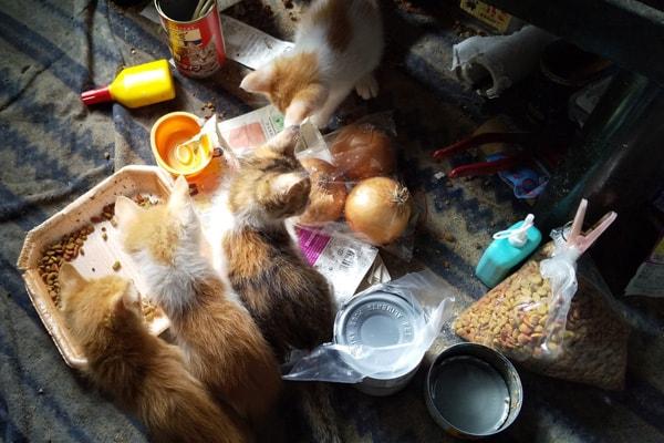 保護された仔猫の預かりボランティア