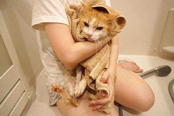 虐待されていた猫をお風呂でふわふわにする