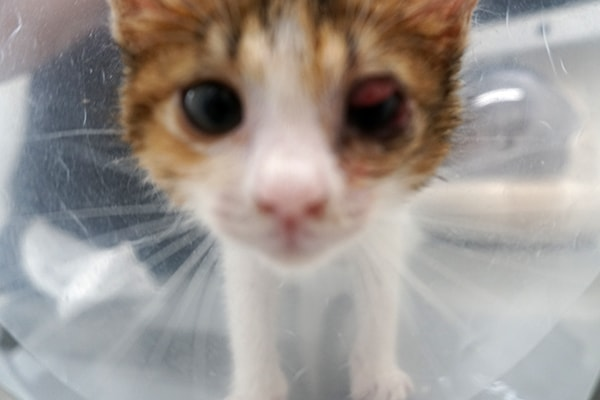 子猫の猫風邪の治療経過