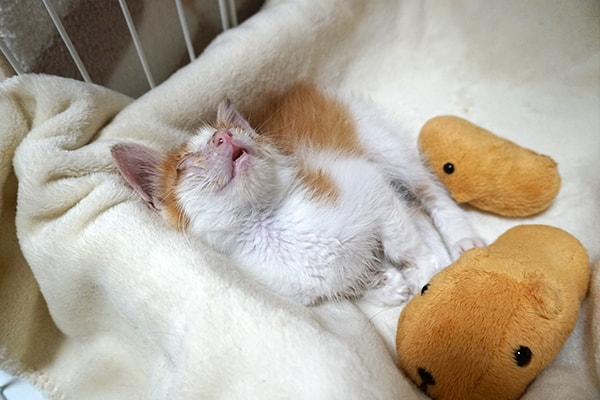 猫風邪にはウィルス性と細菌性がある