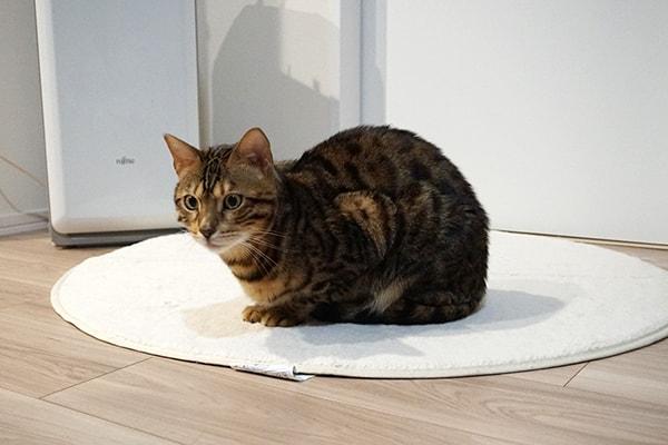 仔猫への投薬と療養