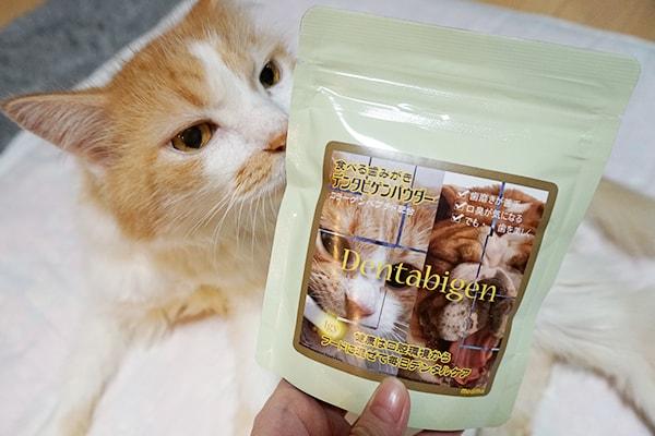 猫の糖尿病の通院記録