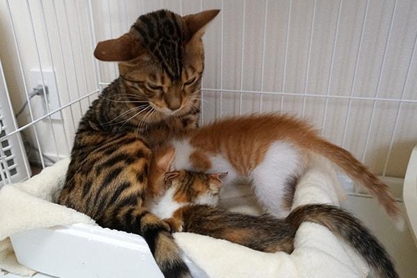 保護した仔猫のきままな生活