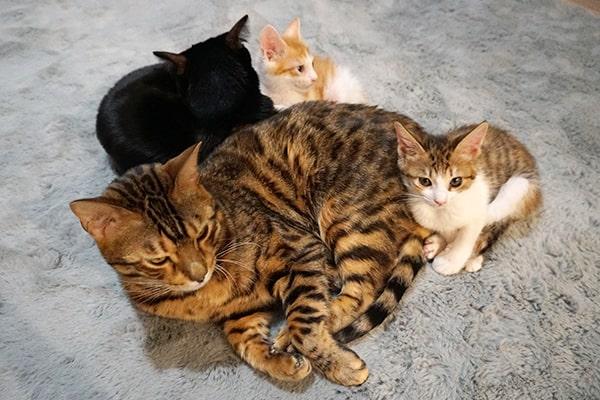 保護猫の譲渡会に参加しました
