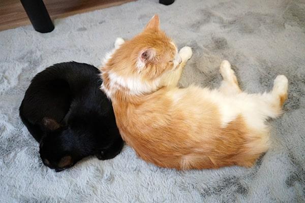 おじさん猫がイケおじ猫になった日