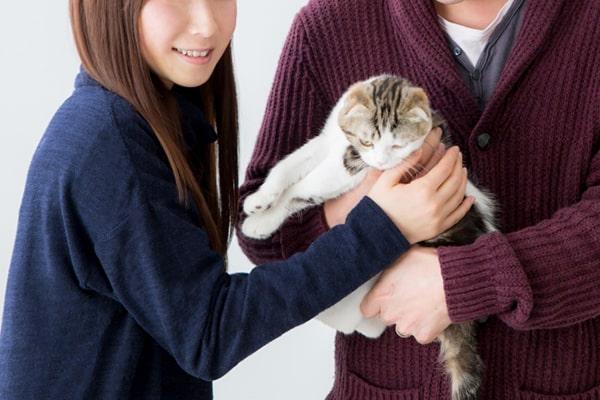 保護猫の譲渡条件はおかしい?