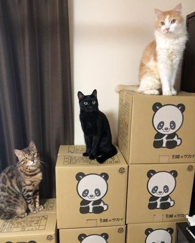 猫と引っ越しするときの移動やトイレ