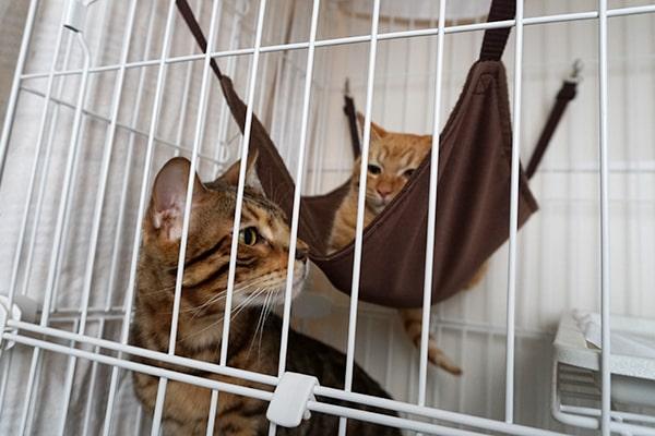 猫の警戒心をなくす方法