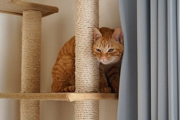 猫の好き嫌いの治し方