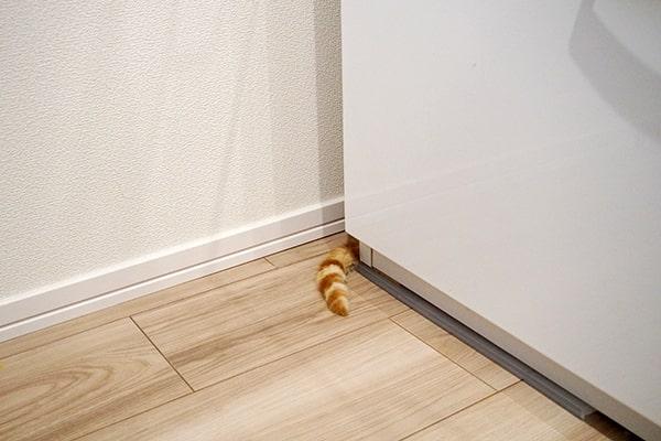 警戒心の強い保護猫のお家探検