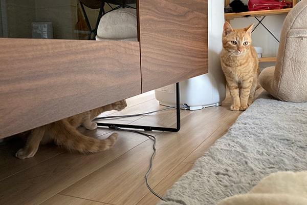 猫が過ごすお気に入りの場所