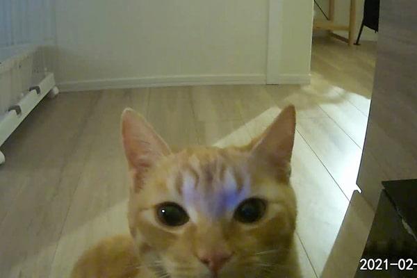 警戒している猫にご飯を食べてもら