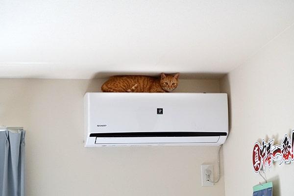 保護猫の預かりボランティア記録