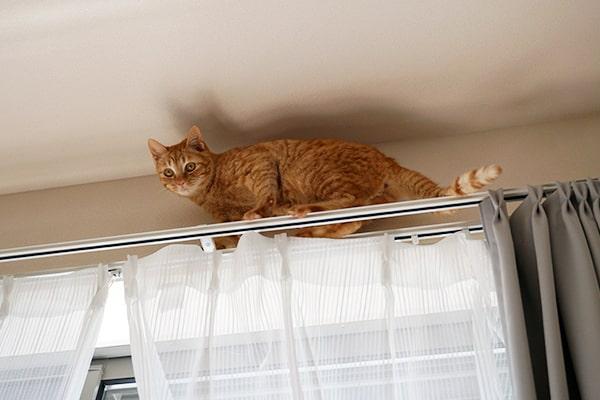 保護猫こちゃの日常