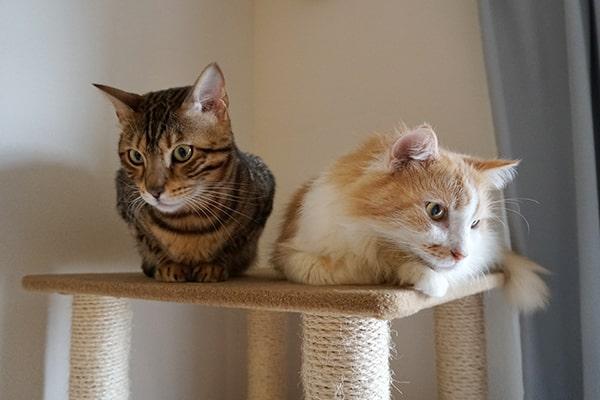 糖尿病の保護猫の預かりボランティア記録