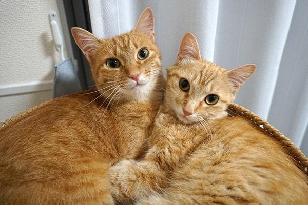 保護猫の預かりボランティア活動記録